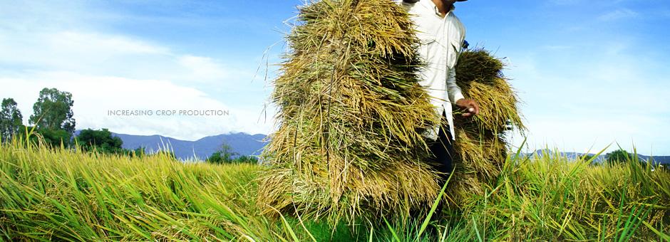 asian pertanian